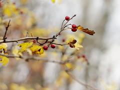 autumn poetry photo by Darek Drapala