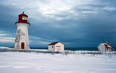 Standing strong in the winter storm. Gaspesie, Quebec, Canada photo by Danny VB