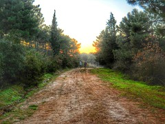 Forest Road - HDR photo by Bkutlak H.D