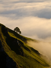 Winnats Pass Tree photo by John Ormerod