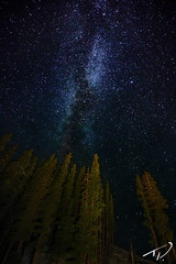 Milky Way Pine Trees photo by Tyler Porter Photography