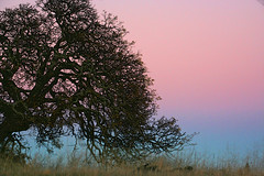 oak tree in the Solstice sunset photo by E>mar