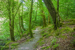 West Cork Woodland photo by Hughie O'Connor