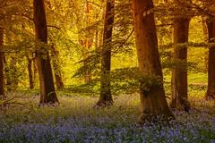 Grass Wood, Near Grassington (Explored) photo by sunstormphotography.com