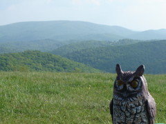 owl at the top of the blue ridge mountains