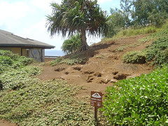 Kilauca Light Station - Bird breeding