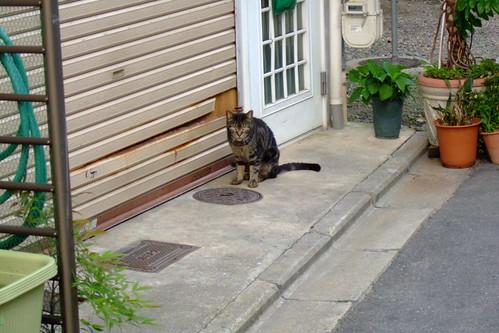 別の道の猫