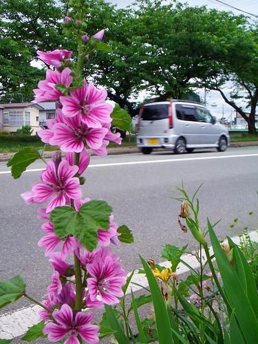 flower along the sidewalk
