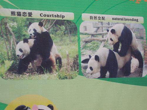 Here's some Panda porn from the panda breeding center in Chengdu: IPB Image