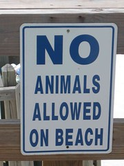 No Animals.jpg