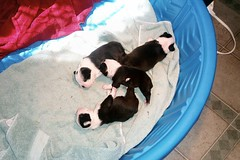 New puppies
