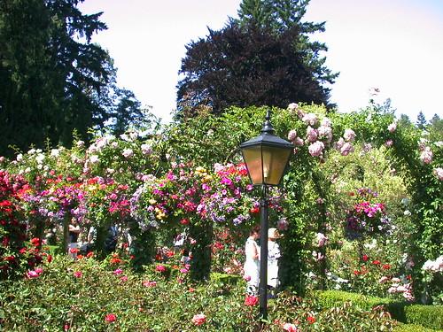 Rose Garden@Butchart Gardens