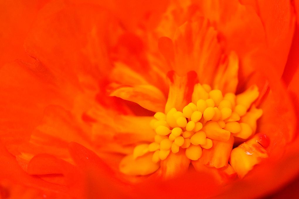 Cottage Porch Flower