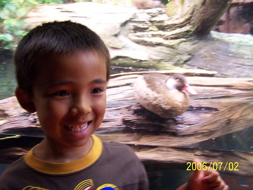 Benjamin at Shedd with the duck