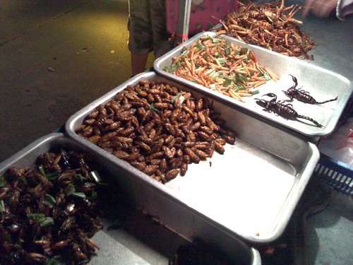 From bottom: crickets, some kinda of larvae, mealworms and scorpions, and grasshoppers