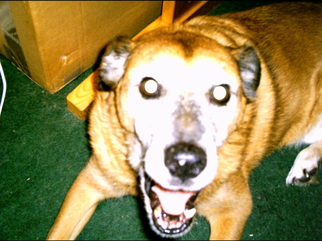 hound of hell?