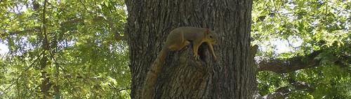 8/5/06: Tree, Squirrel