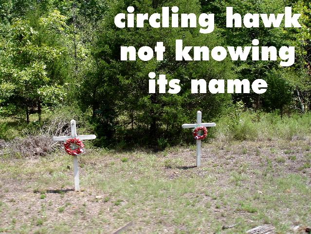 circlinghawk