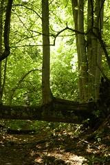 06 - Star Wars Forest