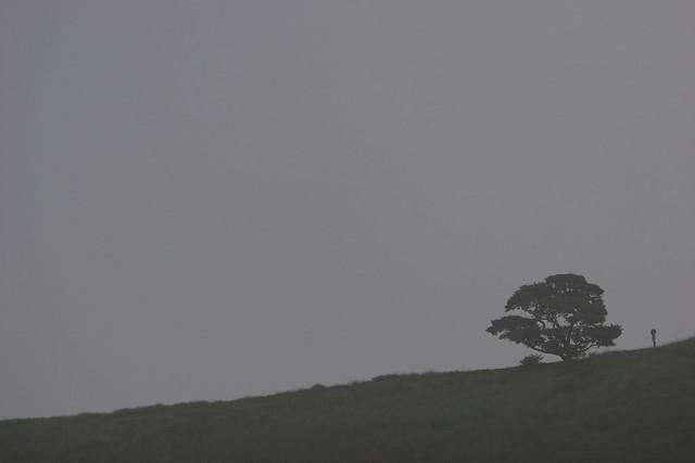 霧中の木立