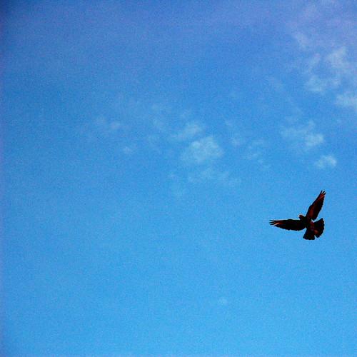 fly, fly, fly!
