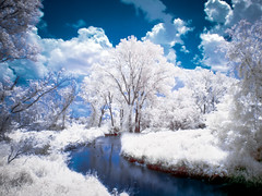 Summer Stream - Infrared photo by Painted Light Studio