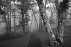 Lewis Falls Trail in Morning Fog, Shenandoah National Park photo by Bindu&Sudhir