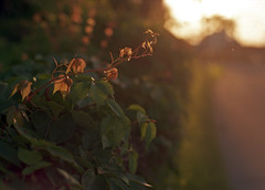 Morning Light II (leicaflex sl, 35mm elmarit) photo by PositiveAboutNegatives