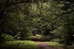 Eerie Woods photo by majestiele.co.uk