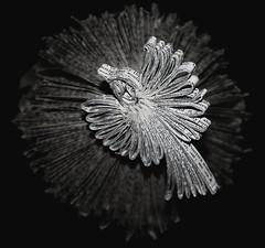 oiseau-livre-papier-05