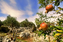 Pomegranate- a symbol of prosperity and ambition photo by Uros P.hotography