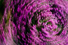 Heather twirl photo by Zed.Cat