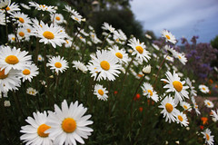 Sooke Flowers (explored 6/18/2013) photo by d.rizzle