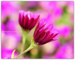Baharın Çekim Gücü photo by Celalettin Güneş