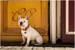 The one eyed dog, who once was dangerous photo by frischauge