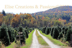 Tree Farm photo by Elise Creations & Passions