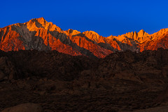 Layered Lone Pine Light photo by howardignatius