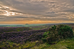 View of the North Yorkshire Moors towards Freebrough Hill. photo by paul downing