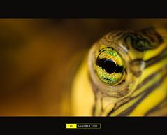 Turtle or Crocodile photo by Sandro Vinci