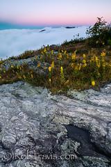 Granite and Flowers [E x p l o r e d] photo by Rob Travis