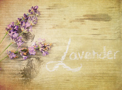 Come and buy my lavender photo by KristinaVF