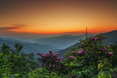 Rhododendron on the Blue Ridge Parkway Explored 6/16/13 photo by itai2009
