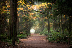 Enchanted Forest #2 photo by Repp1