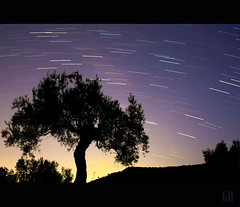 Starlight above olive tree.... photo by Mgpixel