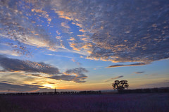 Sunset over a carpet of wild flowers. Snettisham, Norfolk ( Explored ) photo by Gary Pearson landscape photography