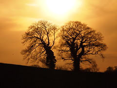 Sunset with trees natural photo by payne_mark70