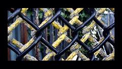 Favorite Fence 2 photo by seattlerayhutch45