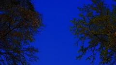 Magical Tree's. photo by Rakesh Raut 321