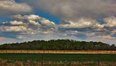 Layered Landscape photo by LostMyHeadache: Absolutely Free *