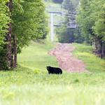 The daily bear sighting! 6/9/16
